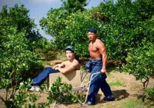 キウイの覇権争いに敗れ捨てられるマッチョ/reference stock photo farmer macho/box macho@著作権フリー画像 農家