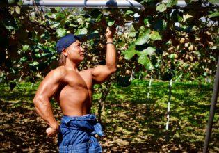 キウイを収穫するマッチョ2@著作権フリー画像 農家