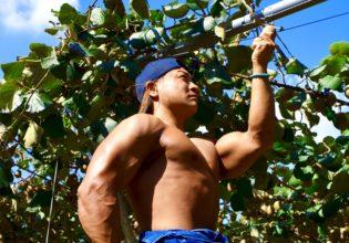 キウイを収穫するマッチョ2@ボディビルダー フリー素材
