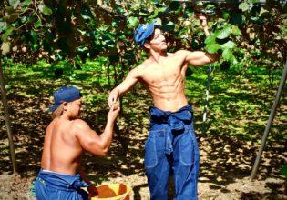 仲良くキウイを収穫するマッチョ/reference stock photo farmer macho@著作権フリー画像 農家