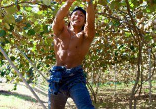 キウイを収穫するマッチョ@ボディビルダー フリー素材