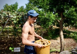 キウイプロテインスムージーが何杯できるか想像してニヤつくマッチョ/reference stock photo farmer macho@農業 写真