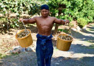 【キウイで筋トレ】サイドレイズ(三角筋のトレーニング)/reference stock photo farmer macho@ボディビルダー フリー素材