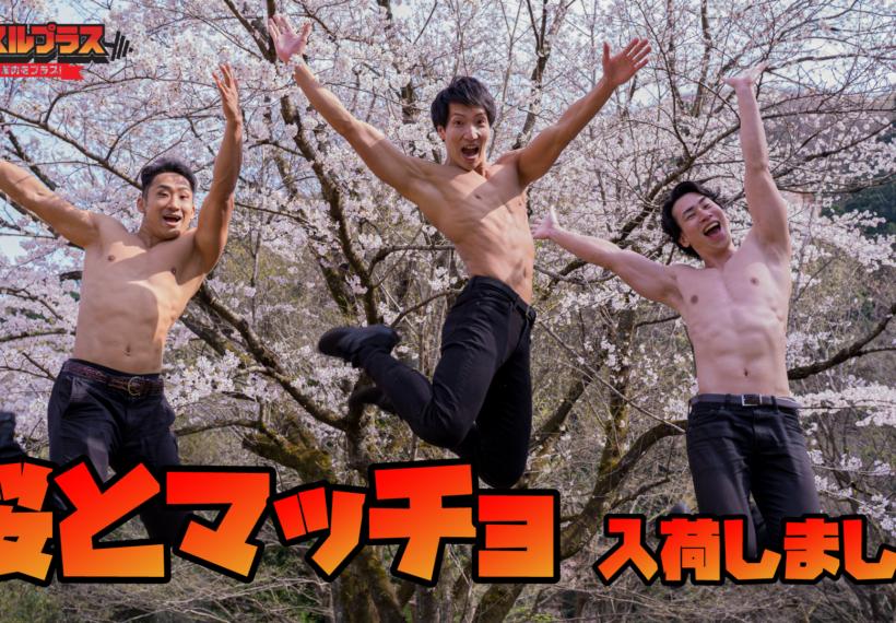 桜とマッチョ/reference stock photo muscle cherry blosssom@フリー素材 筋肉
