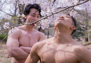 桜を愛でるマッチョ@フリー素材 桜