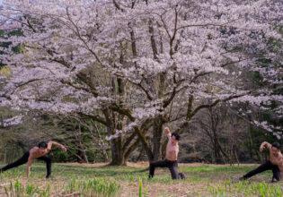 桜に召喚されしマッチョ@俳優 筋肉