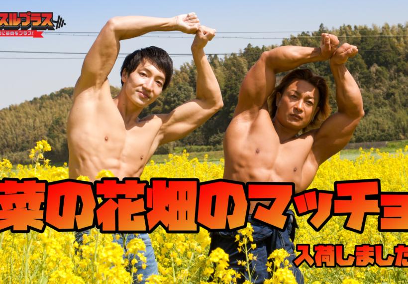 菜の花畑のマッチョ@フリー素材 筋肉