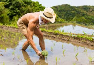 田んぼにブロッコリーを植えるマッチョ@著作権フリー 画像 筋肉