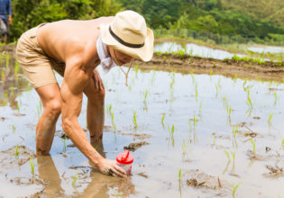 田んぼにプロテインを植えるマッチョ@著作権フリー 画像 筋肉