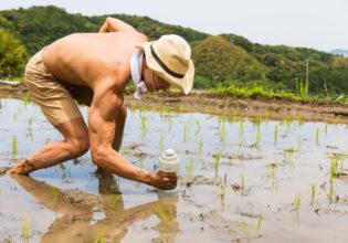 田んぼにダンベルを植えるマッチョ@著作権フリー 画像 筋肉