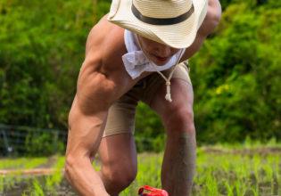田んぼにプロテインを植えるマッチョ/reference photo muscle rice fieled@著作権フリー 画像 筋肉