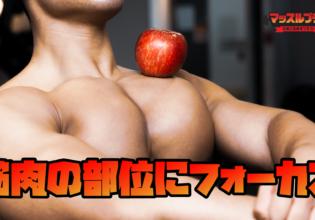「筋肉の部位にフォーカス」の素材をまとめてダウンロード/reference photo muscle chest@アスリートモデル マッチョ