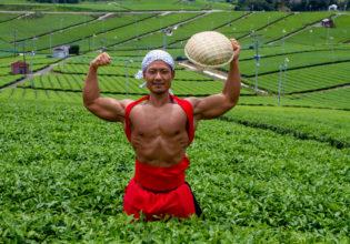 茶畑でダブルバイセプス@フリー素材 筋肉