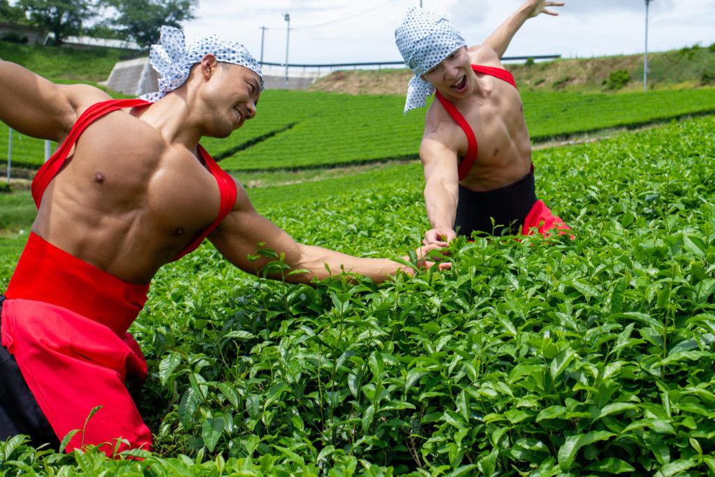 仲良く茶葉を摘むマッチョ@フリー素材 筋肉