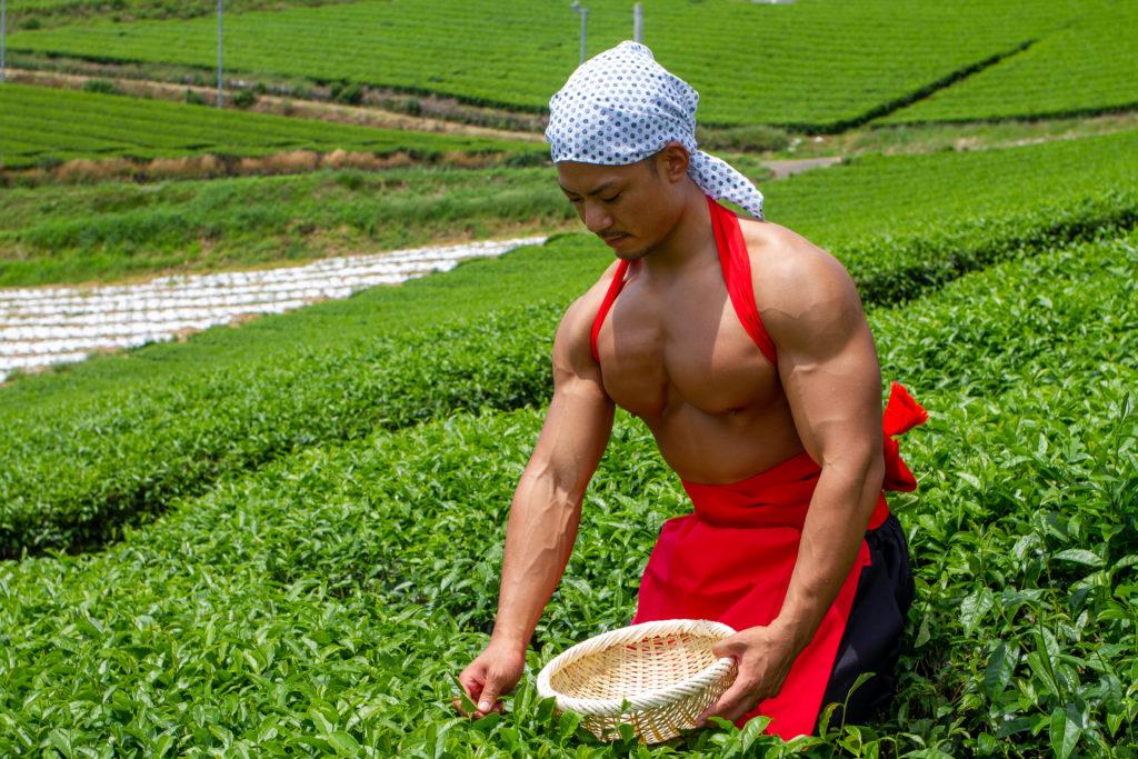 茶摘みマッチョ@フリー素材 筋肉