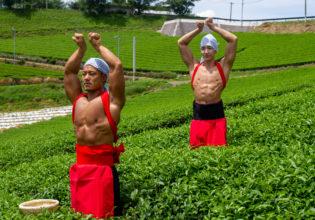 茶畑の精霊マッチョ@フリー素材 筋肉