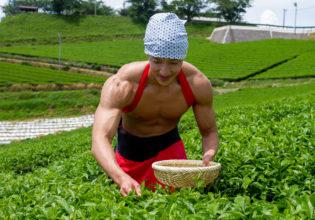 茶葉を摘むマッチョ@フリー素材 筋肉