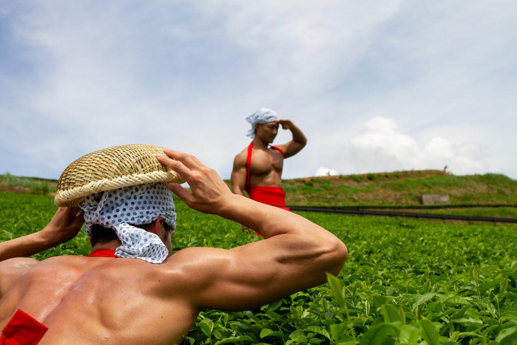 茶畑でかくれんぼするマッチョ@フリー素材 筋肉