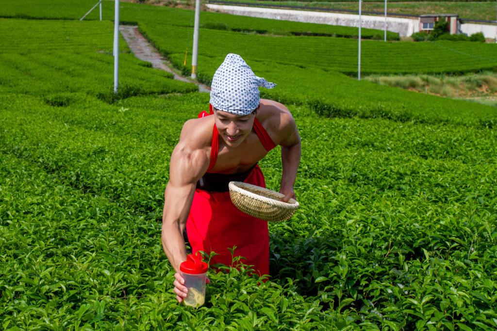 茶畑に抹茶プロテインを植えるマッチョ@フリー素材 筋肉