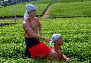 茶畑で手刀で「トンッ」ってするマッチョ/reference photo muscle maccha@フリー素材 筋肉