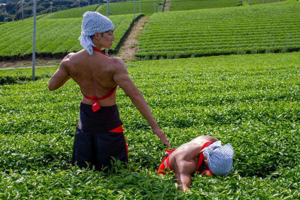 茶畑で始末したマッチョ/reference photo muscle maccha@フリー素材 筋肉