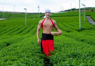 茶摘みマッチョ/reference photo muscle japanese tea@フリー素材 筋肉